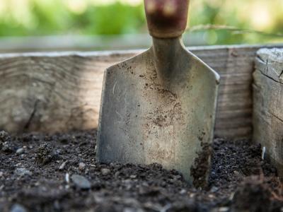 garden-1176406_1280.jpg