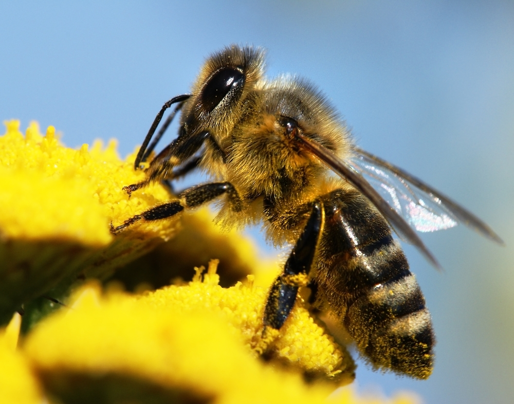 bees.com.jpg