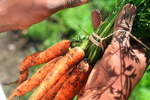 carrotsrealfoodchallenge.jpg