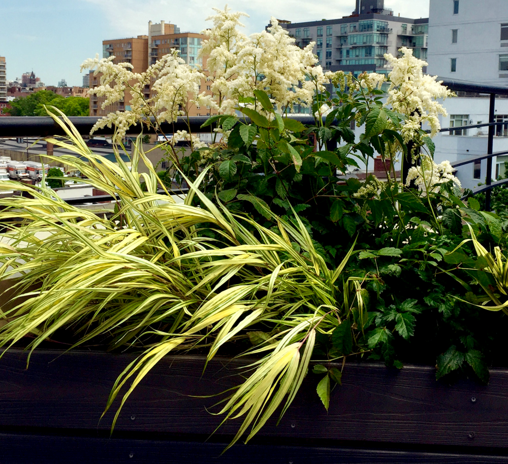 urban rooftop plantings