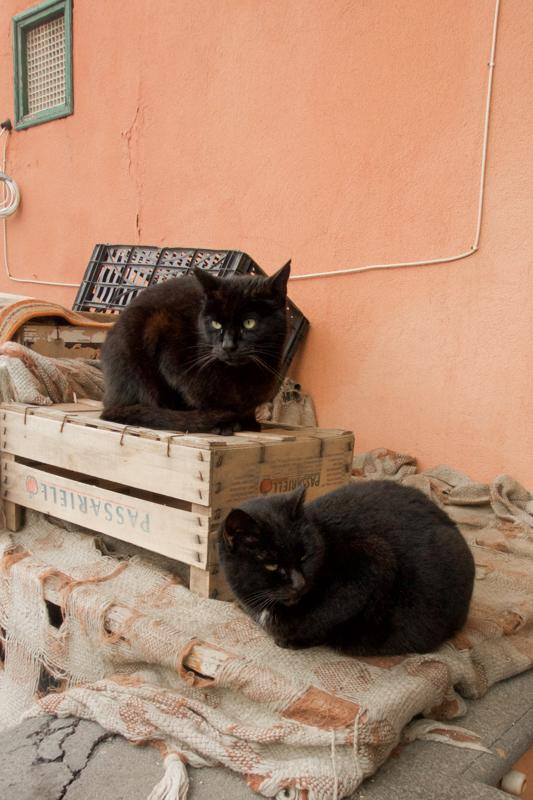 3.17.18. Sorrento - Cats