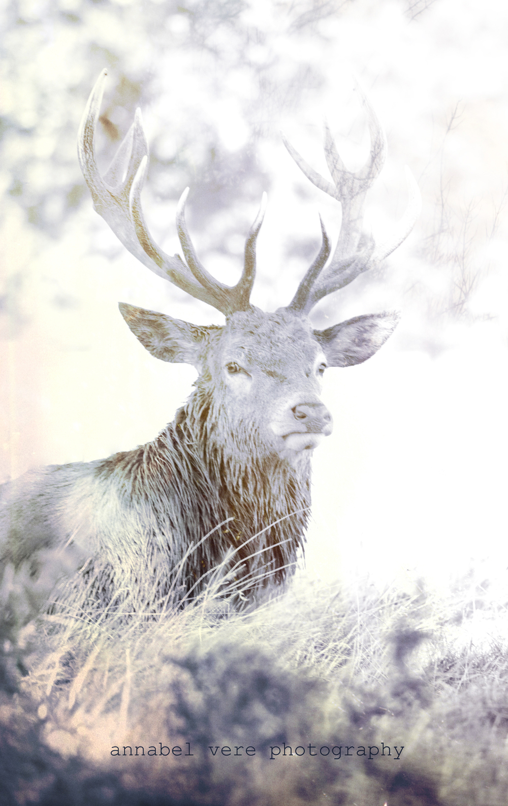 fine-art-stag-photo.jpg