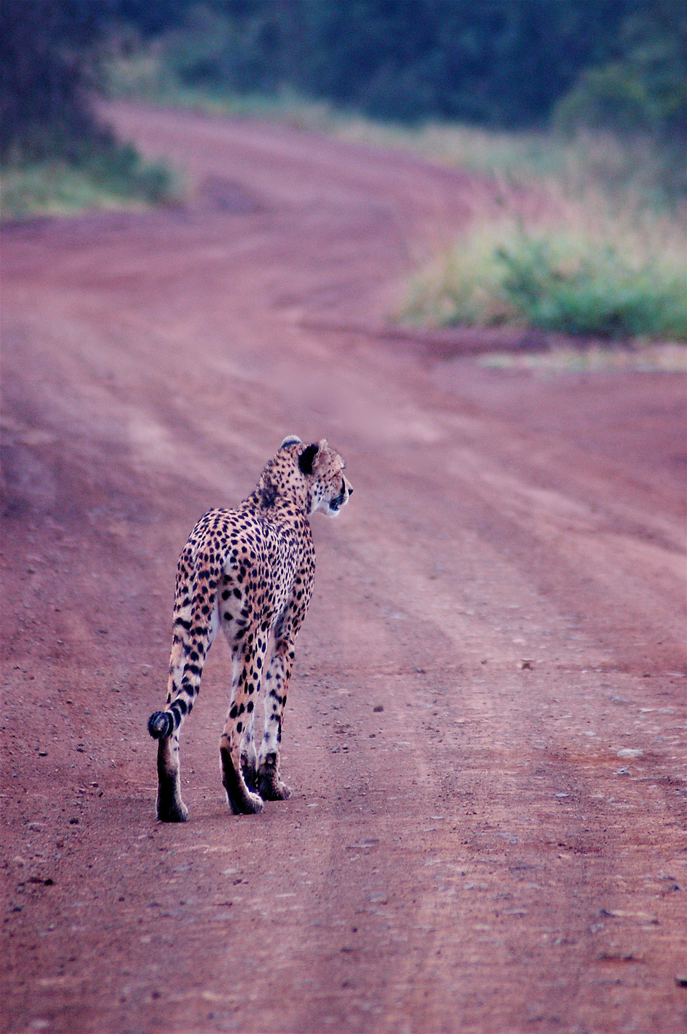 travel-2016-cheetah-photo.jpg