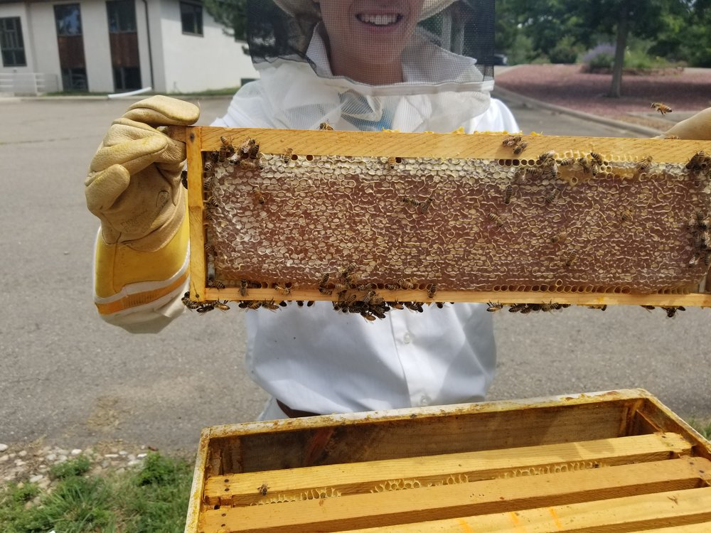 8-2017 Honeycomb 2.jpg