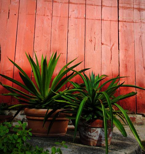 F_Butson_Sappey Garden 10-15 (207).jpg