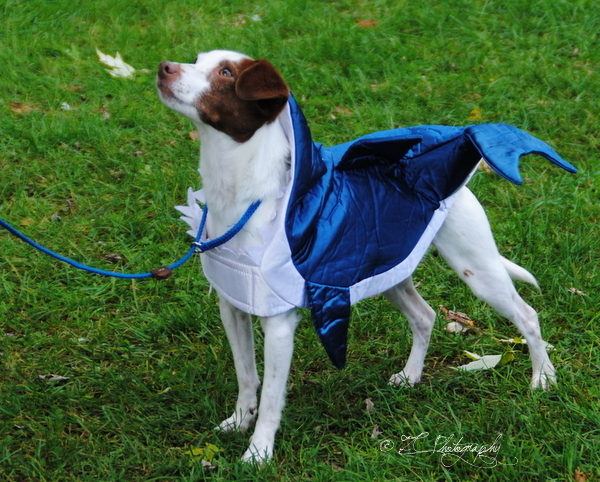 Dog Days_Riveredge_10-6-16 (143)_WM.jpg