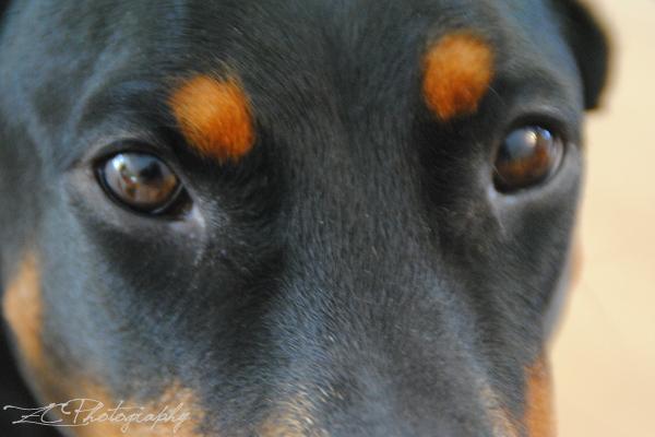 Roxy (6)_B.JPG