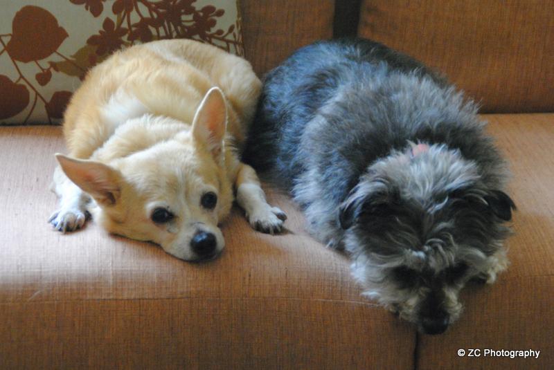 P_DW Dogs (3)b.jpg
