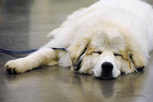 Dog Project class 2-20-17 (224).jpg