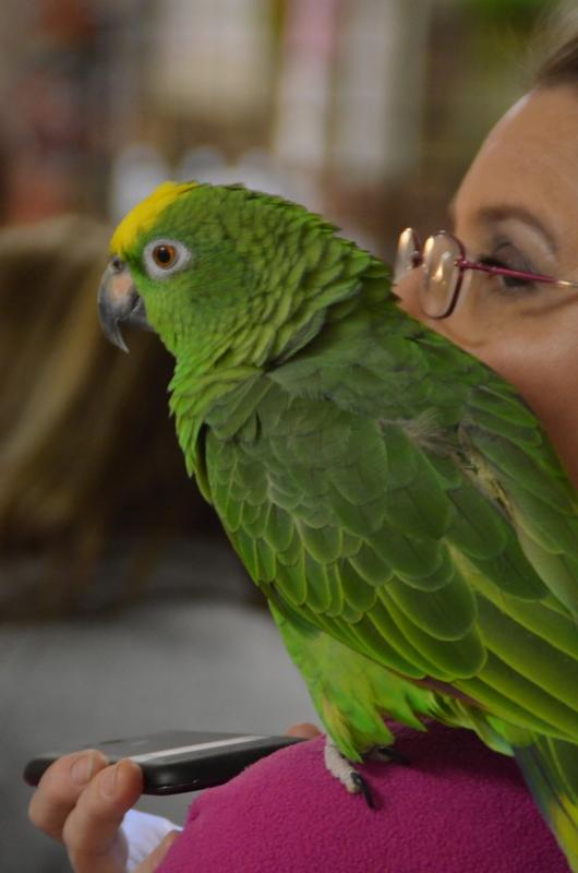 Bird Fair_1-7-18 (3).JPG