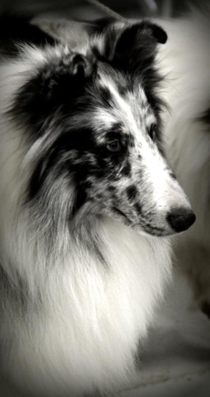 Oshkosh Dog Show 1-13-18 (265).JPG