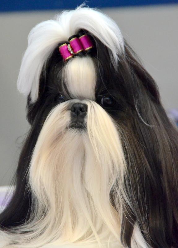 Oshkosh Dog Show 1-13-18 (288).JPG