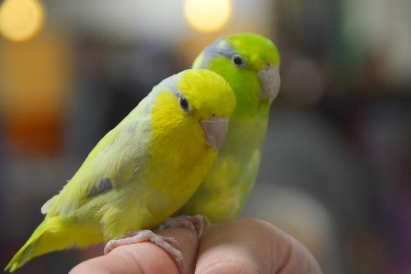 Bird Fair 3-4-18 (120).JPG