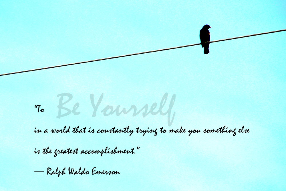 4x6_bird on a wire (3) w text.JPG
