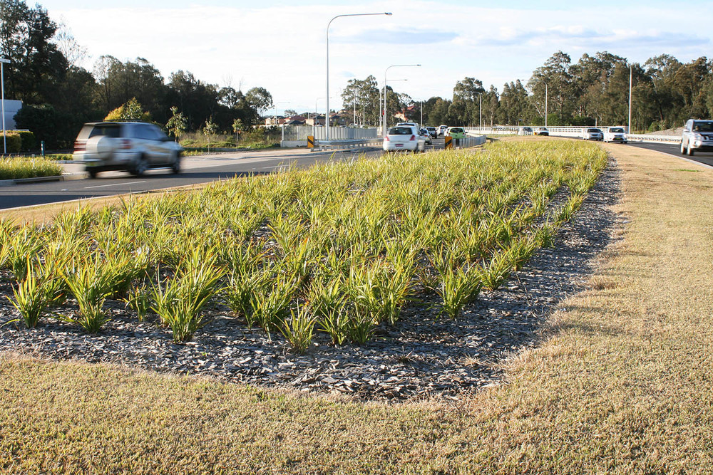 planting with the median.jpg