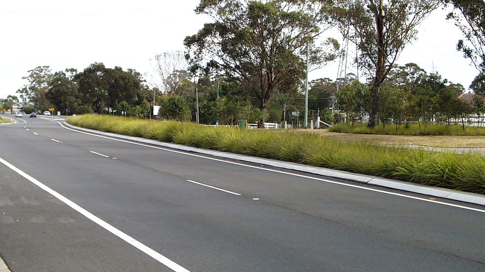 planting-within-the-median.jpg