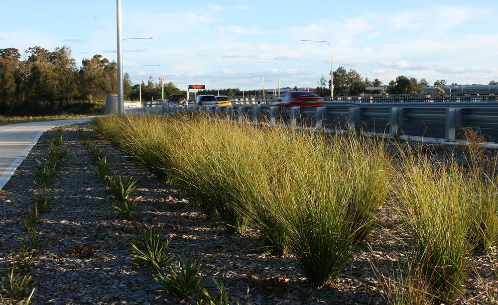 roadside planting 2.jpg