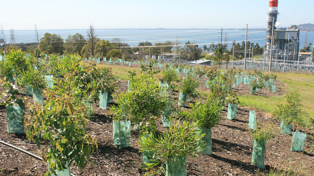planting on slopes above power station.jpg