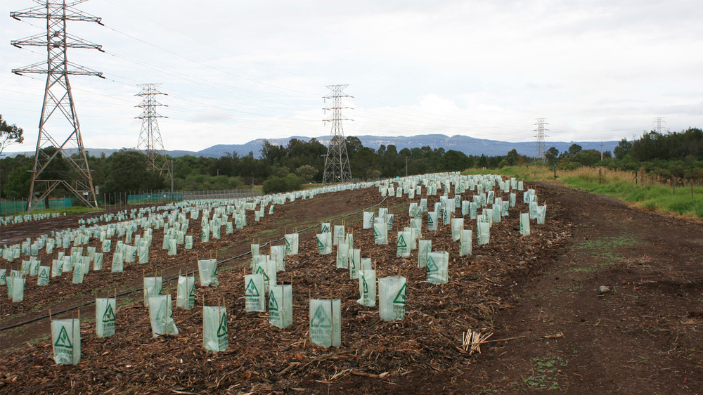 planting-in-front-of-power-station.JPG