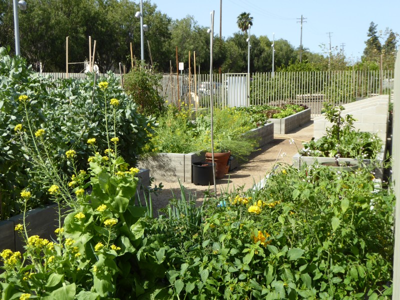 Learning garden vegetables
