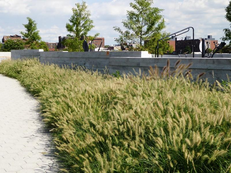 Native grasses adjoining upper terrace