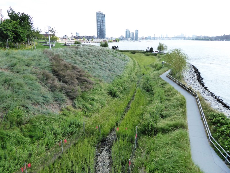 Native grasses on slope, wetland & riveredge path