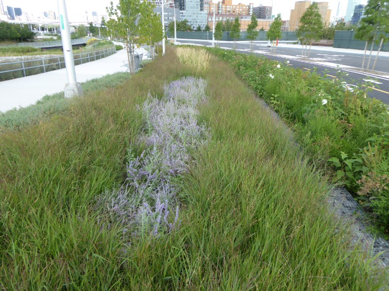 Planting along drainage swale between road & path