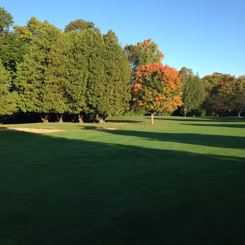 fall_tree2.jpg