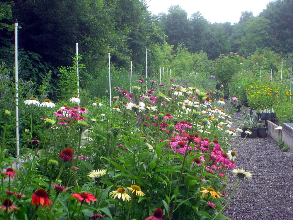 Catskill Native Nursery, Kerhonkson, NY