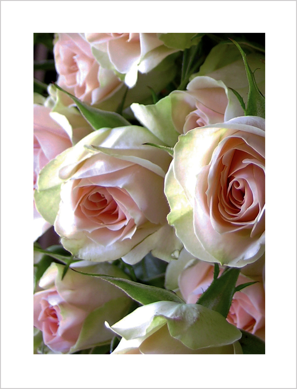 Roses Note Card from Little Note Card