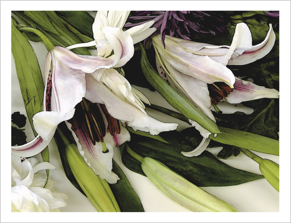 Stargazer Lilies Note Card from Little Note Card