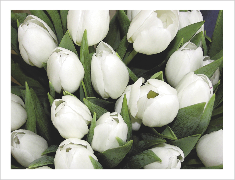 White Tulips Note Card from Little Note Card
