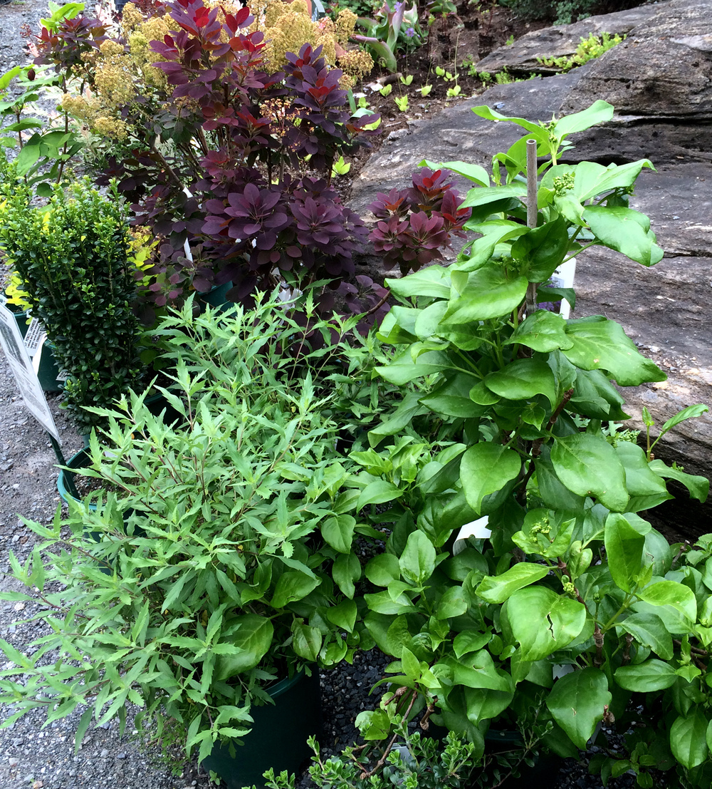 Berkshire Botanical Garden Plant Sale #2
