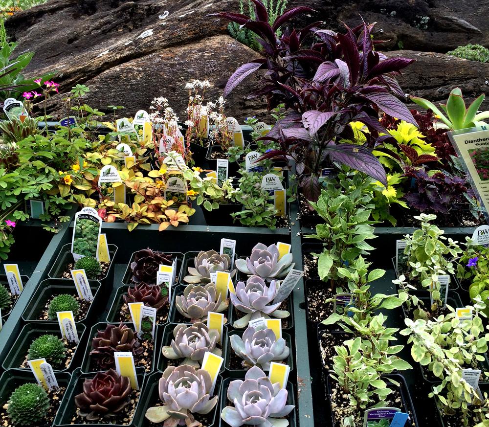 Berkshire Botanical Garden Plant Sale 2016 #1