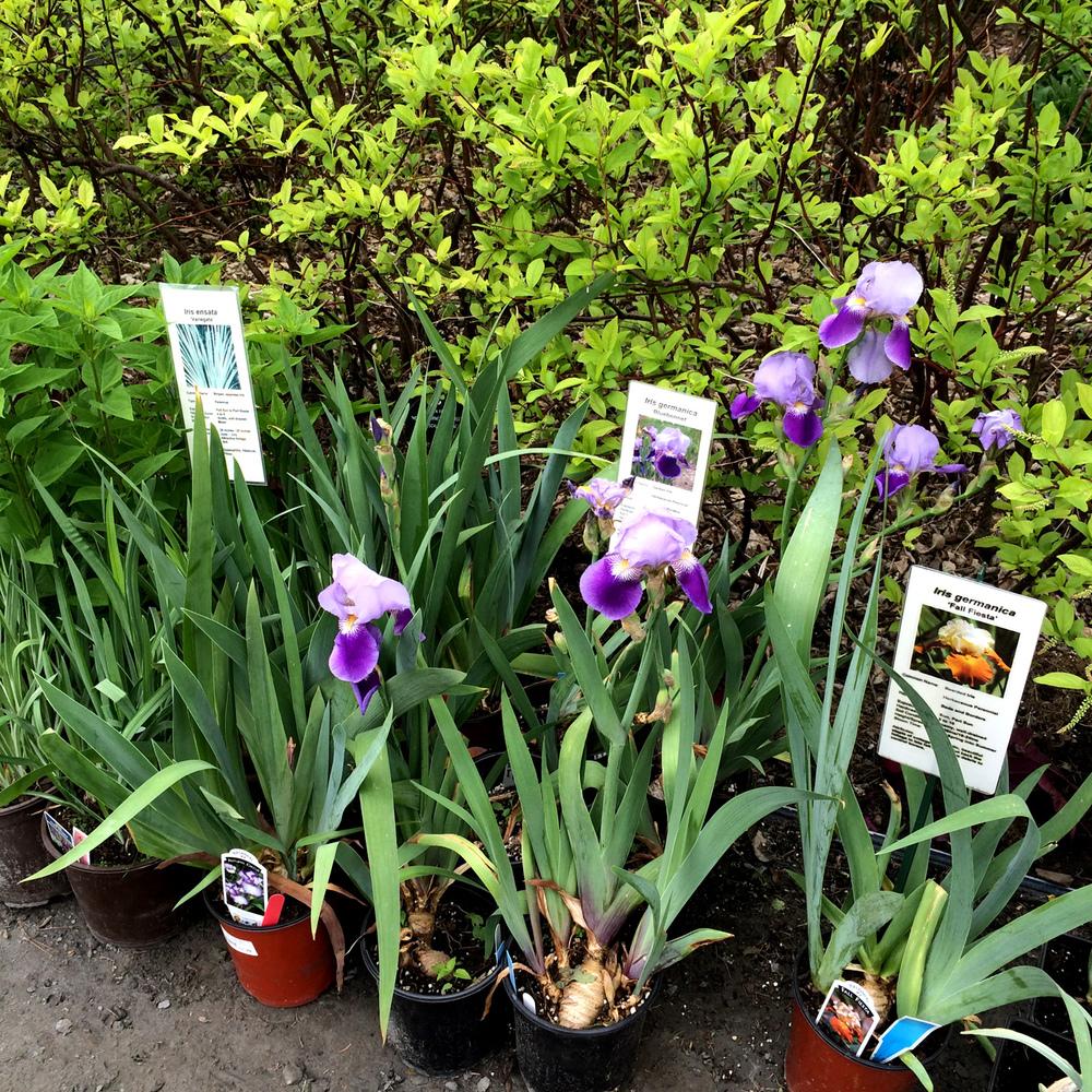 Berkshire Botanical Garden Plant Sale 2016 #4