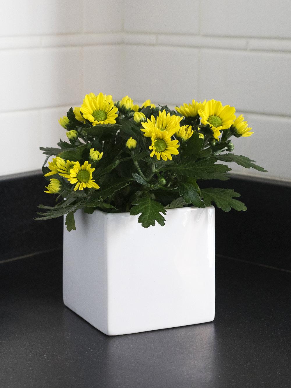 ChrysanthemumsinSquareVase