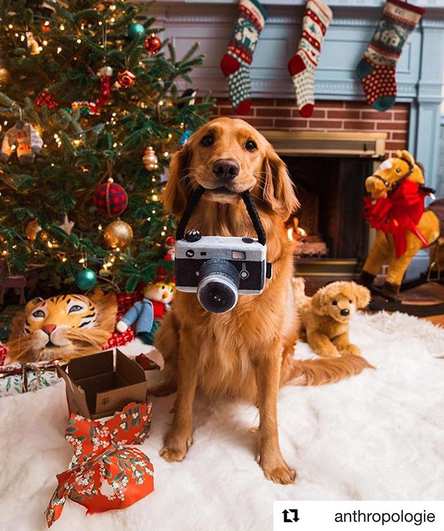 One of the best sights to wake up to on Christmas.  #Repost @anthropologie with @get_repost ・・・ Favorite cameraman 📸 Photo via @puffinandbennie (link in profile to shop)