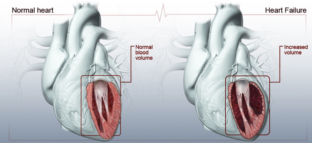 HeartIllustration_9.jpg