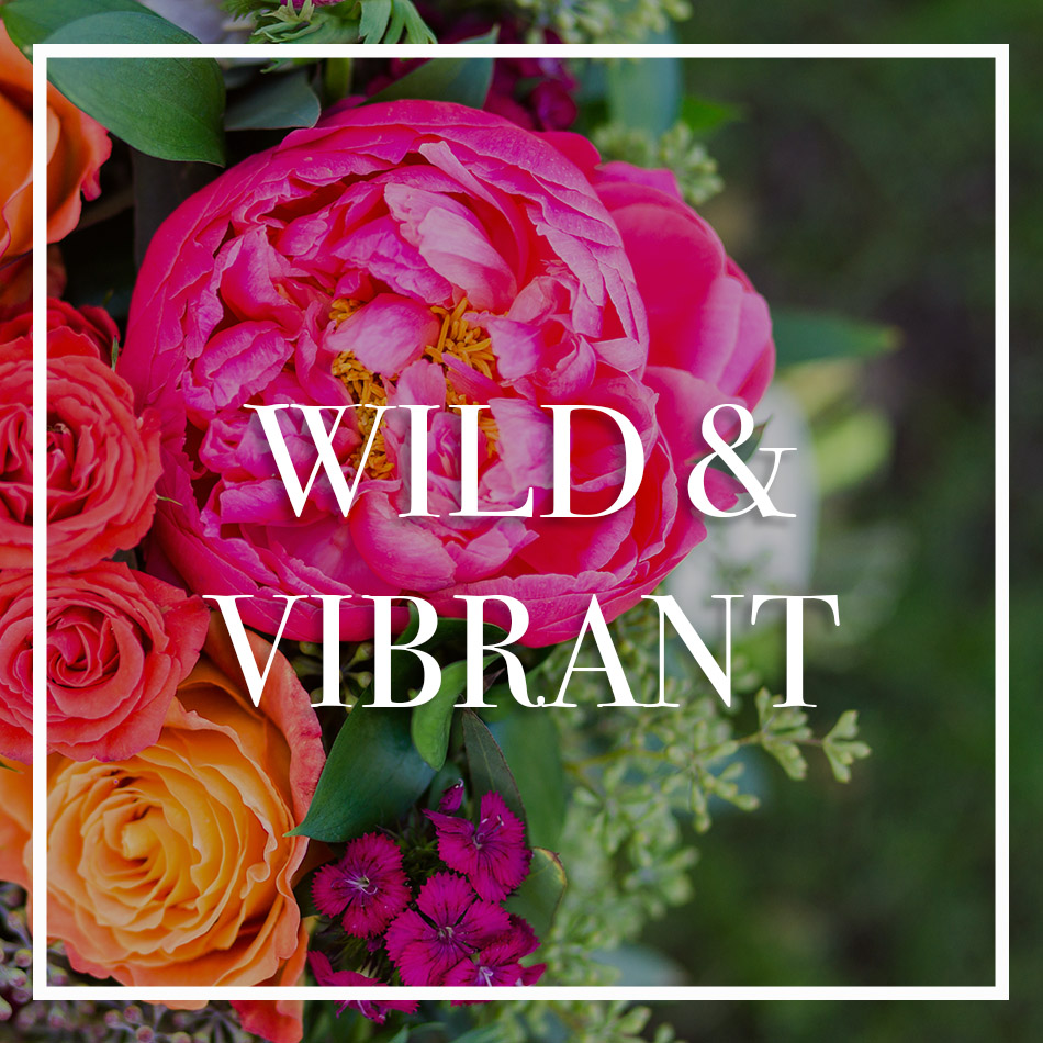 WCFD-Portfolio-COVER-WILDVIBRANT.jpg