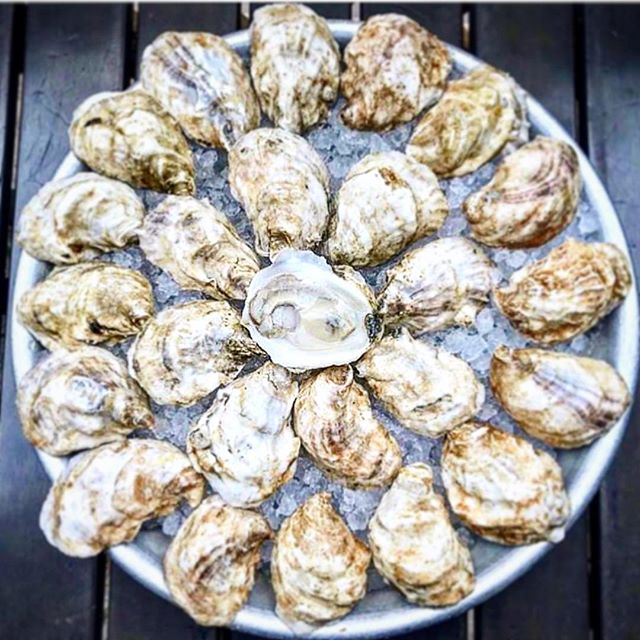 Don't miss all the shucking fun! Stop in today for HAPPY HOUR ALL DAY! $1.50 oysters all night long! Shoutout to @billionoyster for partnering with us to save NYC waters 🙏🏻 🐠 and @lonelywhale for snapping this amazing #repost ❤️ @skurnikwines is here doing a Scotch tasting that you CAN NOT MISS, COMPLIMENTARY with a classic Penicillin cocktail! 🥃🔥