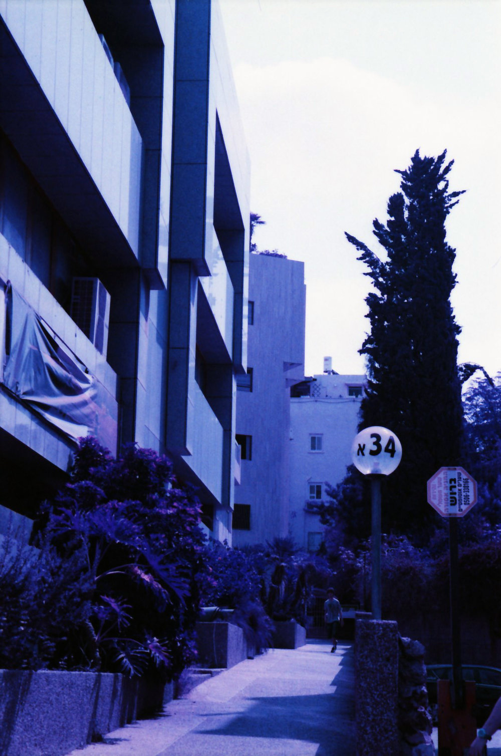 Subject Adam | Film Lomography Lomochrome Purple, 35mm | Ramat HaSharon, Israel 2015