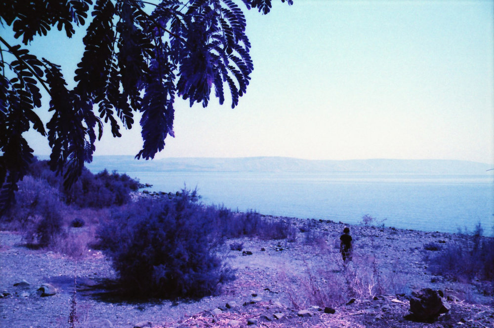 Subject Itamar | Film Lomography Lomochrome Purple, 35mm | Galilee, Israel 2015