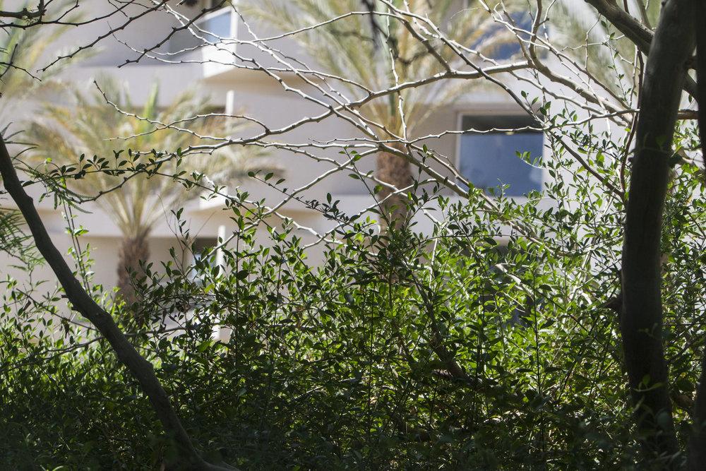 Eilat-may-2017-00082.jpg