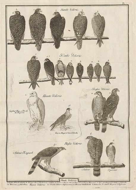 dendroica: Observations sur le vol des oiseaux de proie by Jean Huber 1784 a by peacay on Flickr. Bird observations by Jean Huber 1784.