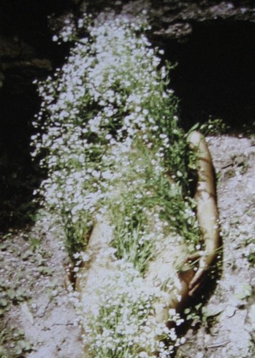 efedra: Flowers on Body, 1970 by Ana Mendieta