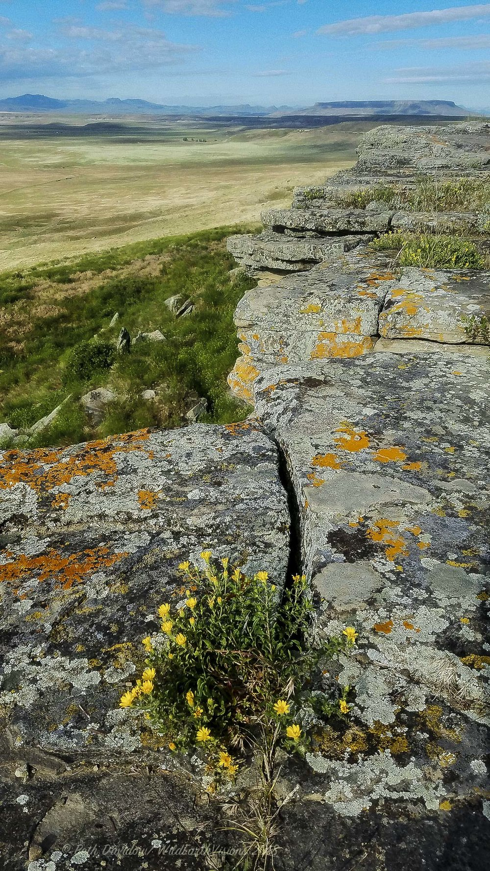 Colorful lichens and flowers along the clifftop.