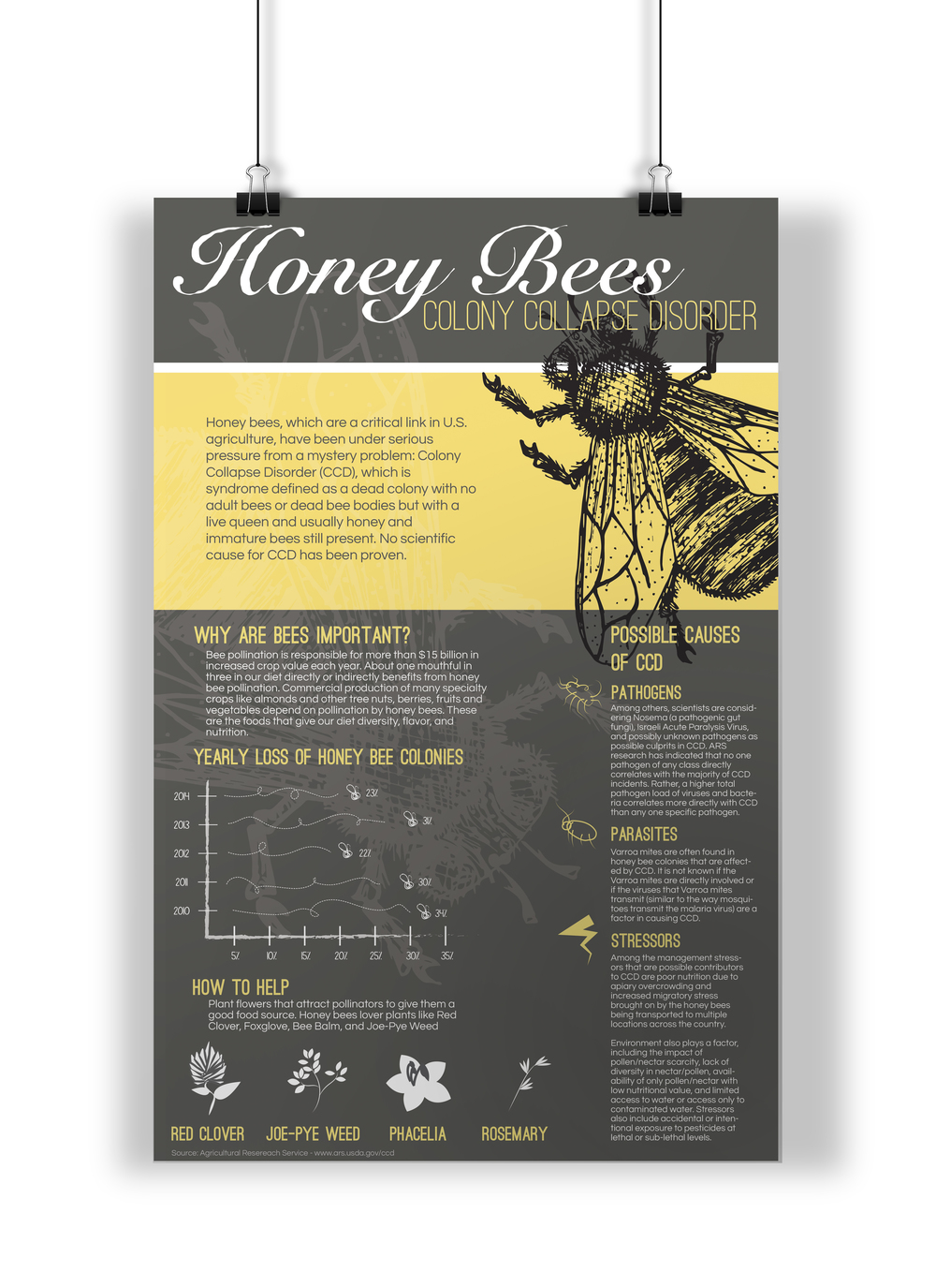 Honey Bees: Colony Collapse Disorder
