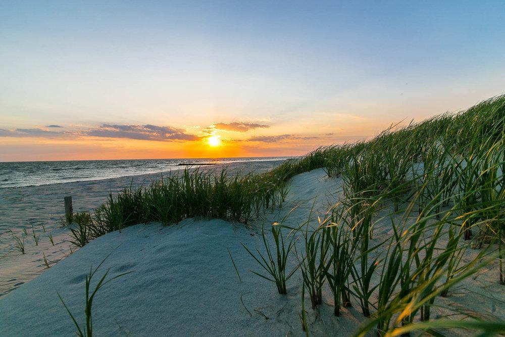 Sand Grass