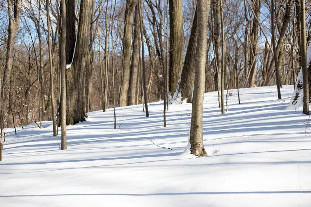 snowy_forest_park-1.jpg