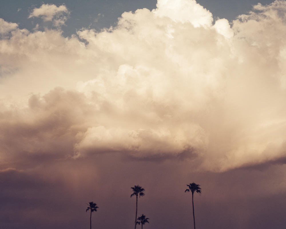 Storm Clouds and Palm Trees